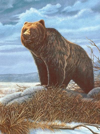 Malen nach Zahlen - Grizzlybär   eBay